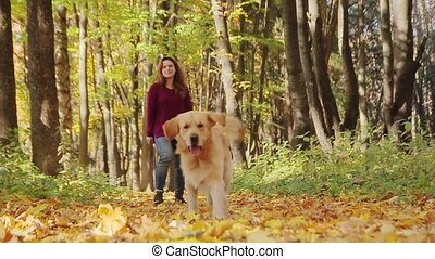 Girl playing with golden retriever dog in the park. Girl throwing stick to a dog. Slow motion.