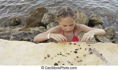 Girl playing with Paguroidea on a beach - Little girl...