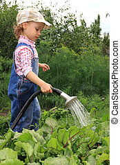 Girl pours a vegetable garden.  - A little girl pours beet.