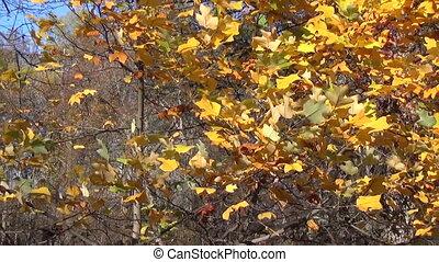 girl rake leaves autumn