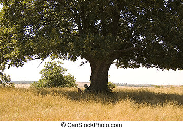 Girl reading under tree, spanish countryside