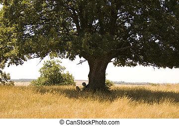 Girl reading under tree, spanish countryside