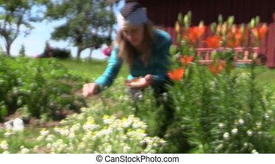 """girl reap camomile garden - """"young gardener girl reap..."""