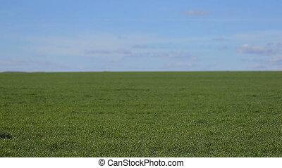 Girl ride a bike on grass field