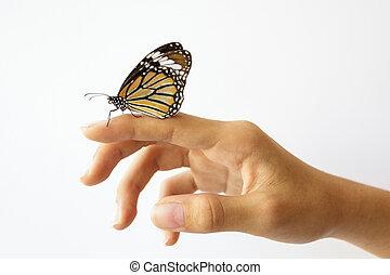 girl, séance, papillon, main., beau