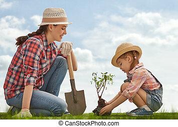girl, sapling, arbre, plante