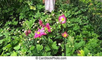 Girl smelling flower - Slow motion little girl smelling...