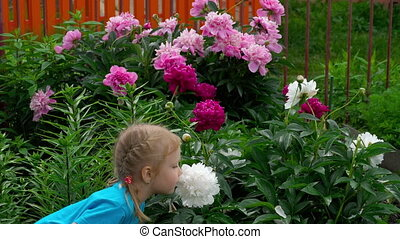 Girl sniffs peonies flowers - Three-year-old blond girl...