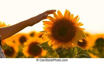 Girl stroke-oars a gold sunflower