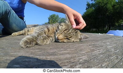 Girl strokes cat lying wooden surface of old wooden planks