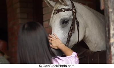 Girl stroking a horse.