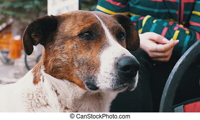 Girl Stroking Stray Dog near a Bench in the City Park. Sad Dog Muzzle