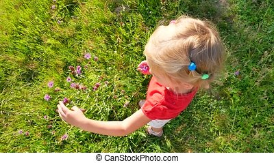 girl tears wild flowers in a meadow