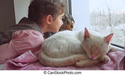 girl teen and pets cat and dog looking out the window, the cat sleeps