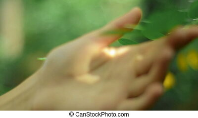 girl touches a branch with green leaves - close-up of a girl...
