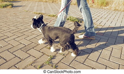 Girl walking with little funny dog in the park