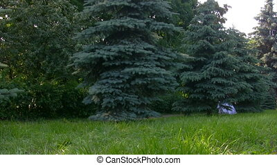 girl walks from behind tree in park