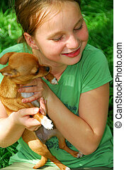Girl with a dog - Smiling young girl holding a chihuahua...
