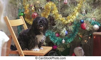Girl with dog at Christmas tree