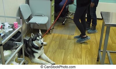 Girl with dog in veterinary clinic.