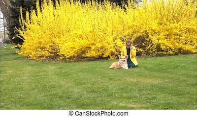 girl with dog on a lawn - girl with welsh corgi dog sitting...