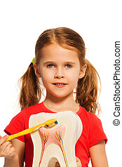 Girl with pigtails holding tooth model and brush