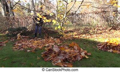 girl yard tree leaves