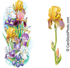 girlanda, o, kosatec, květiny