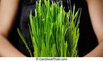 Girl's hands holding green grass under rain, slow motion