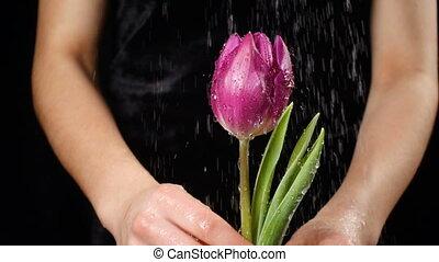 Girl's hands holding wet pink tulip under rain, slow motion