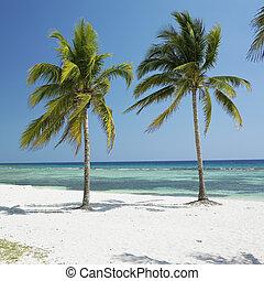 giron, 海, カリブ海, playa, キューバ