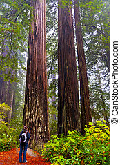 Girt looking at two giant Redwoods