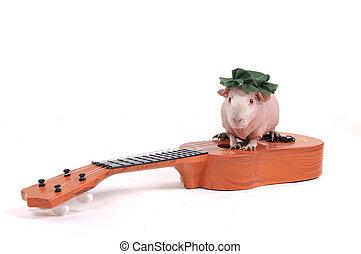 gitaar, cavy