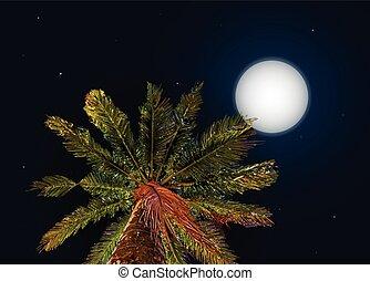giungla, a, night., vettore, fondo, con, luna, e, palma