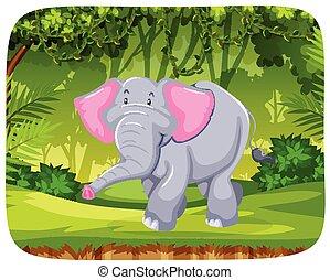 giungla, elefante