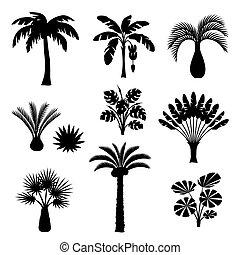 giungla, piante, palmizi, natura, esotico, set., ...