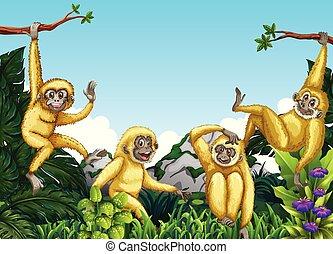 giungla, scimmia
