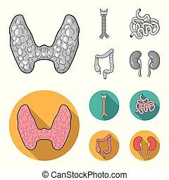 glândula, human, estilo, símbolo, espinha, jogo, intestino, vetorial, apartamento, órgãos, pequeno, estoque, web., monocromático, intestine., grande, ícones, ilustração, cobrança, tiróide