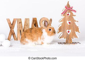 glückliches weihnachten, zeit