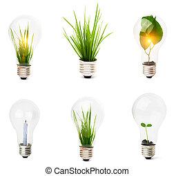 glühbirne, wachsen, pflanze