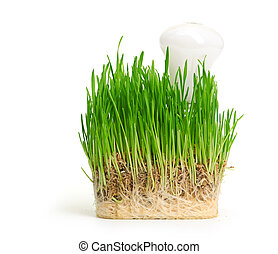glühlampe, auf, gras, symbolizing, grün, energie
