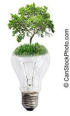 glühlampe, mit, grüner baum, freigestellt, weiß, hintergrund
