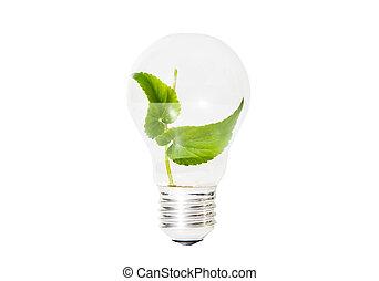 glühlampe, mit, grünes blatt, innenseite, freigestellt