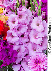 glaïeul, fleurs, dans, fleur pleine