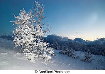 glacé, hiver, nuit, forêt