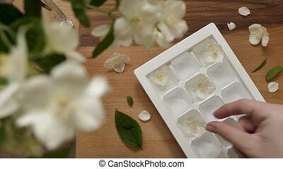 glace, glacial, jasmin