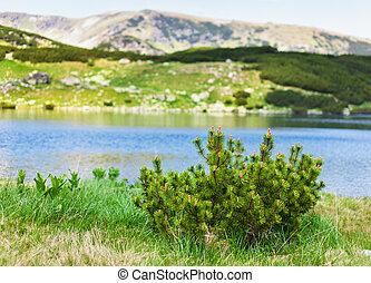glacial, lago, calcescu, en, parang, montañas, rumania