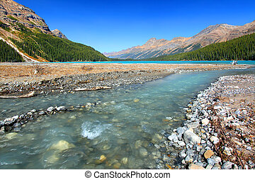 Glacial Waters Flow to Peyto Lake