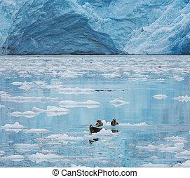 glaciar, alaska
