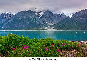 glaciar, nacional, alaska, bahía, parque, whild, flores